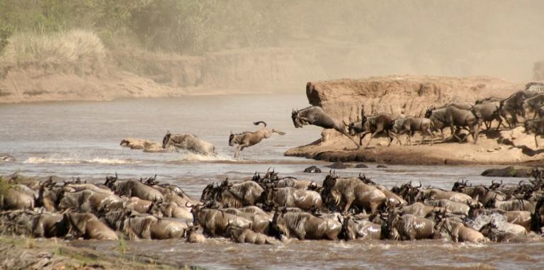 KENYA 5 - Maasai Mara