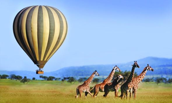 soaringabovegiraffes